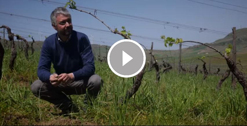 Rallo, Artigiani del vino dal 1860