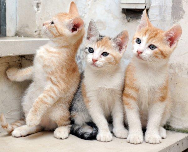 capri, gatti associazione
