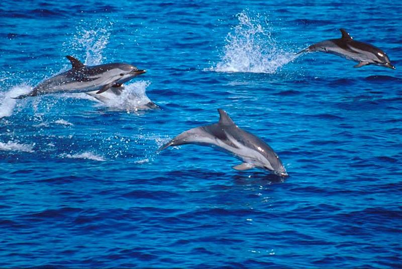 """""""Delfini guardiani dell' isola di Capri"""" oggi 8 giugno ore 10 piazza San Nicola Anacapri"""