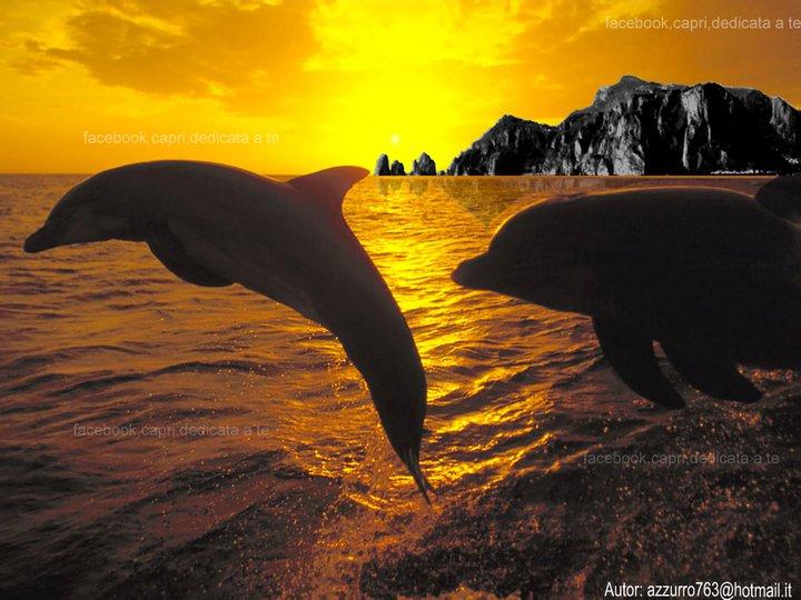 Delfini a Capri