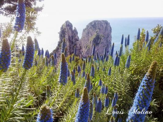 foto capri faraglioni spring primavera