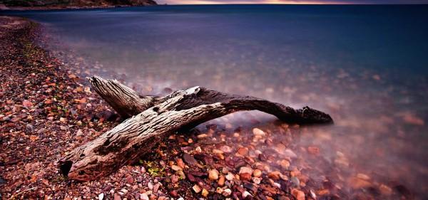 """""""Naufraghi"""" in mostra a Capri le sculture in legno marino di Ciro De Riso"""