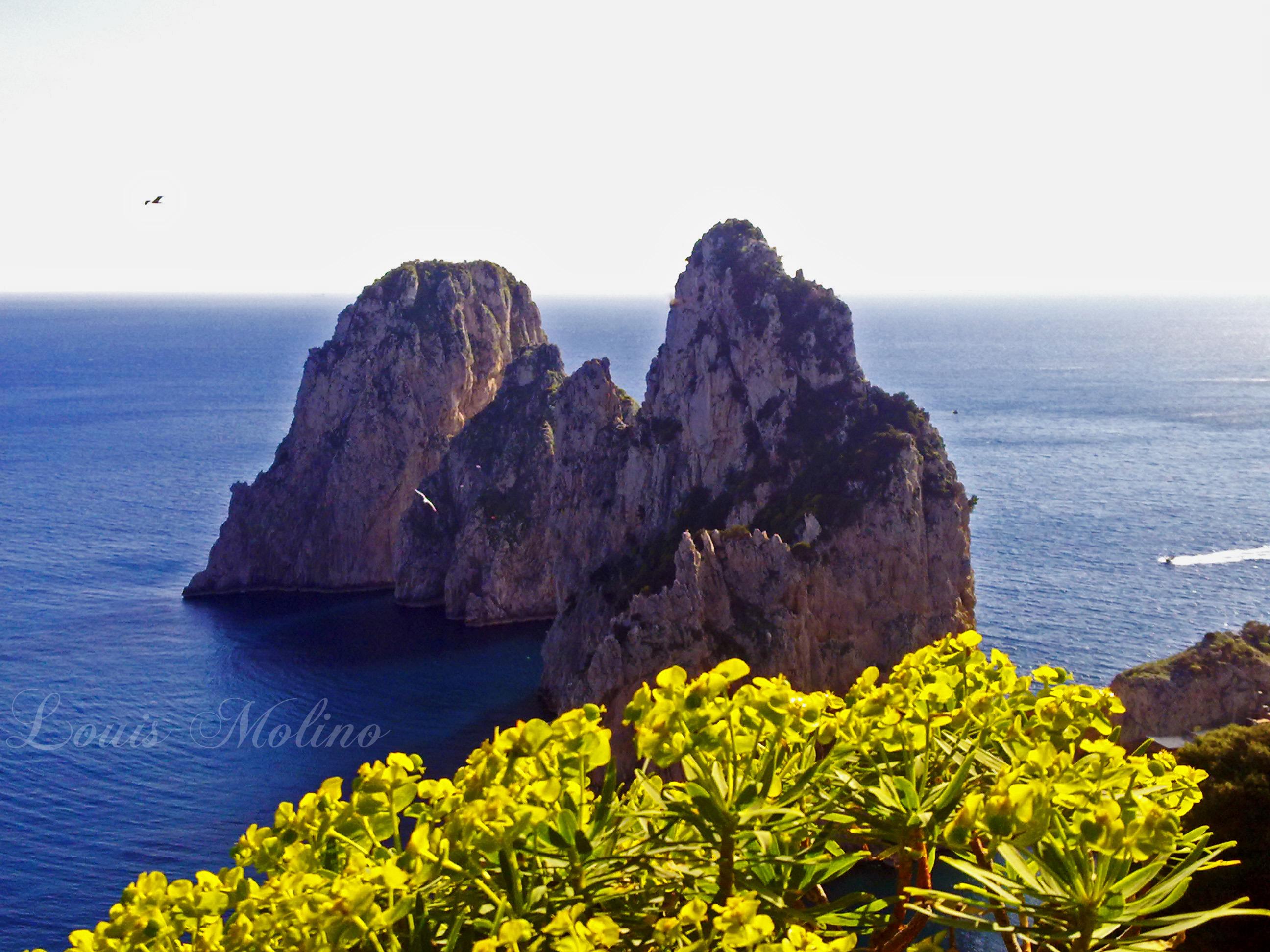 Regolamenti: A Capri Siepi basse per non impedire la vista delle bellezze dell'isola