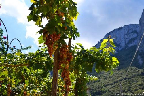 Don vincenzo uva 1