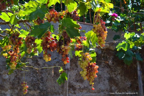 don vincenzo uva 3