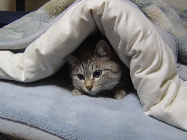 Come difendere dal freddo  i Cani e i Gatti ?