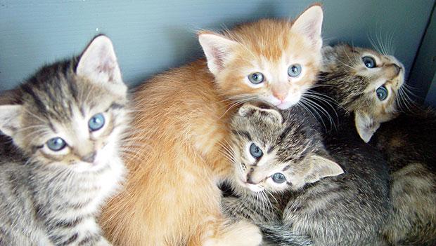Capri: Ennesimi  avvelenamenti di Gatti, la lettera aperta dell' Associazione I Migliori Amici