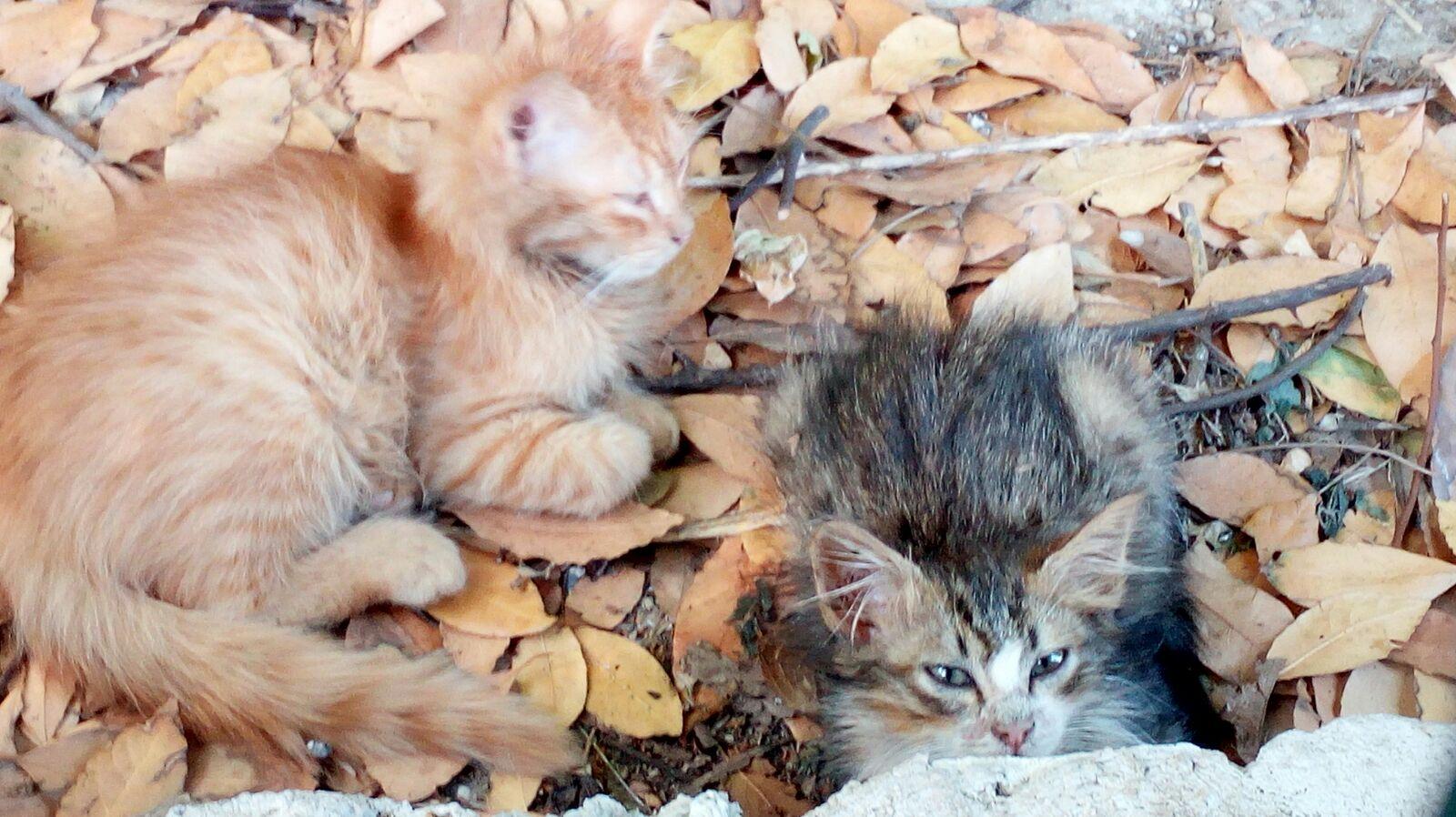 Capri. Gattini cercano Casa, le foto tenerissime dei cuccioli in cerca di Famiglia