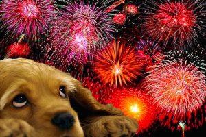 Capodanno a Capri: IL Comune invita ad evitare fuochi d'artificio dannosi per Cani e Gatti
