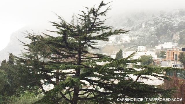 Neve a Capri, imbiancata Anacapri, fiocca anche in Piazzetta ( VIDEO E FOTO ESCLUSIVE)