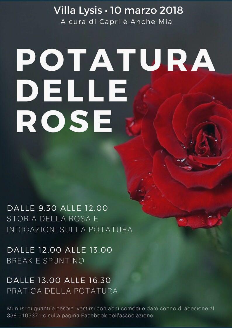 """Capri. A scuola di """"Potatura delle Rose"""" nella meravigliosa Villa Lysis"""