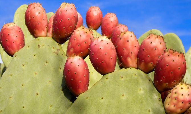 La Marmellata di Fichi d'India e Limoni di Capri – Ricetta Tipica