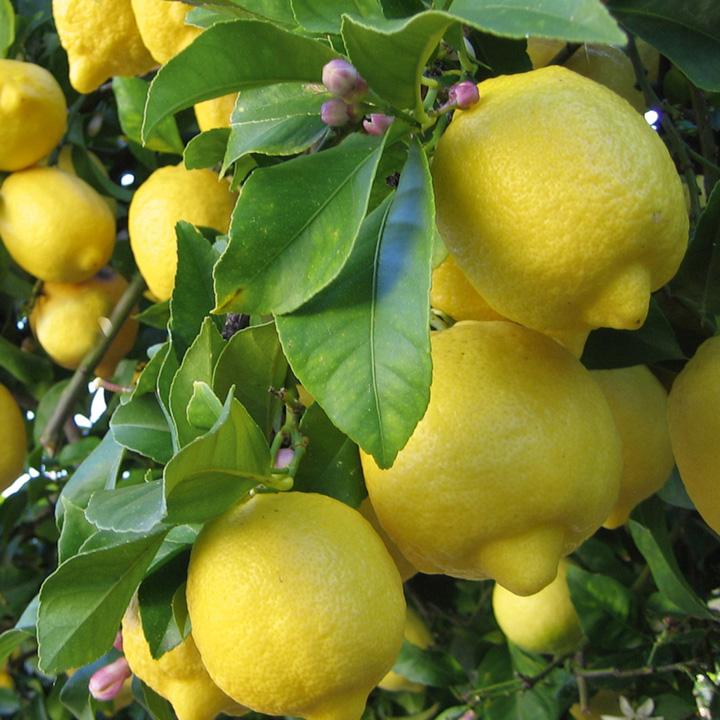Da Capri la Meravigliosa ricetta della Marmellata di Limoni