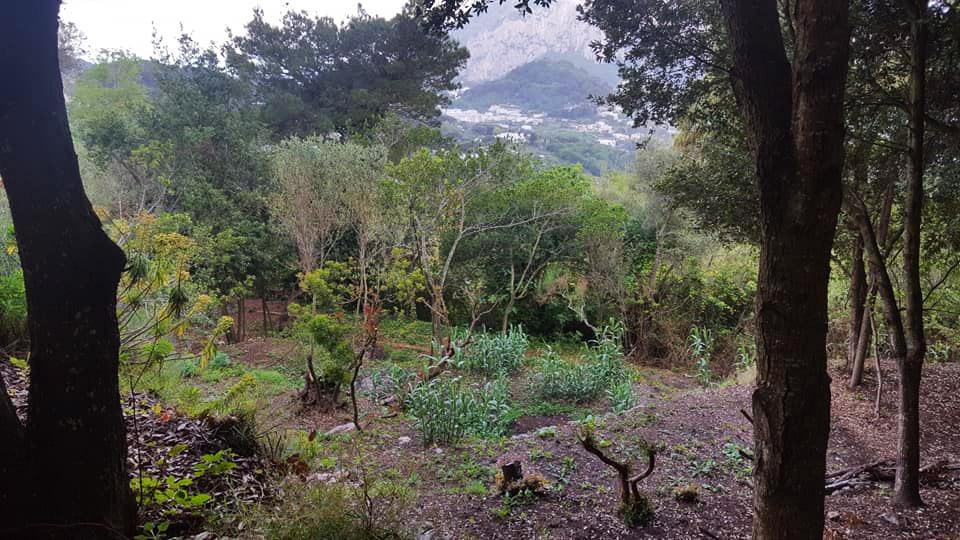 """Continuano le domeniche di """"Capri é anche mia"""" presso il """"Fondo Poma"""" a Tiberio"""