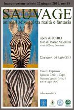 """In Mostra a Capri """"SAUVAGE 2019"""" Animali selvaggi visti da Schili e foto di Marco Valentini"""