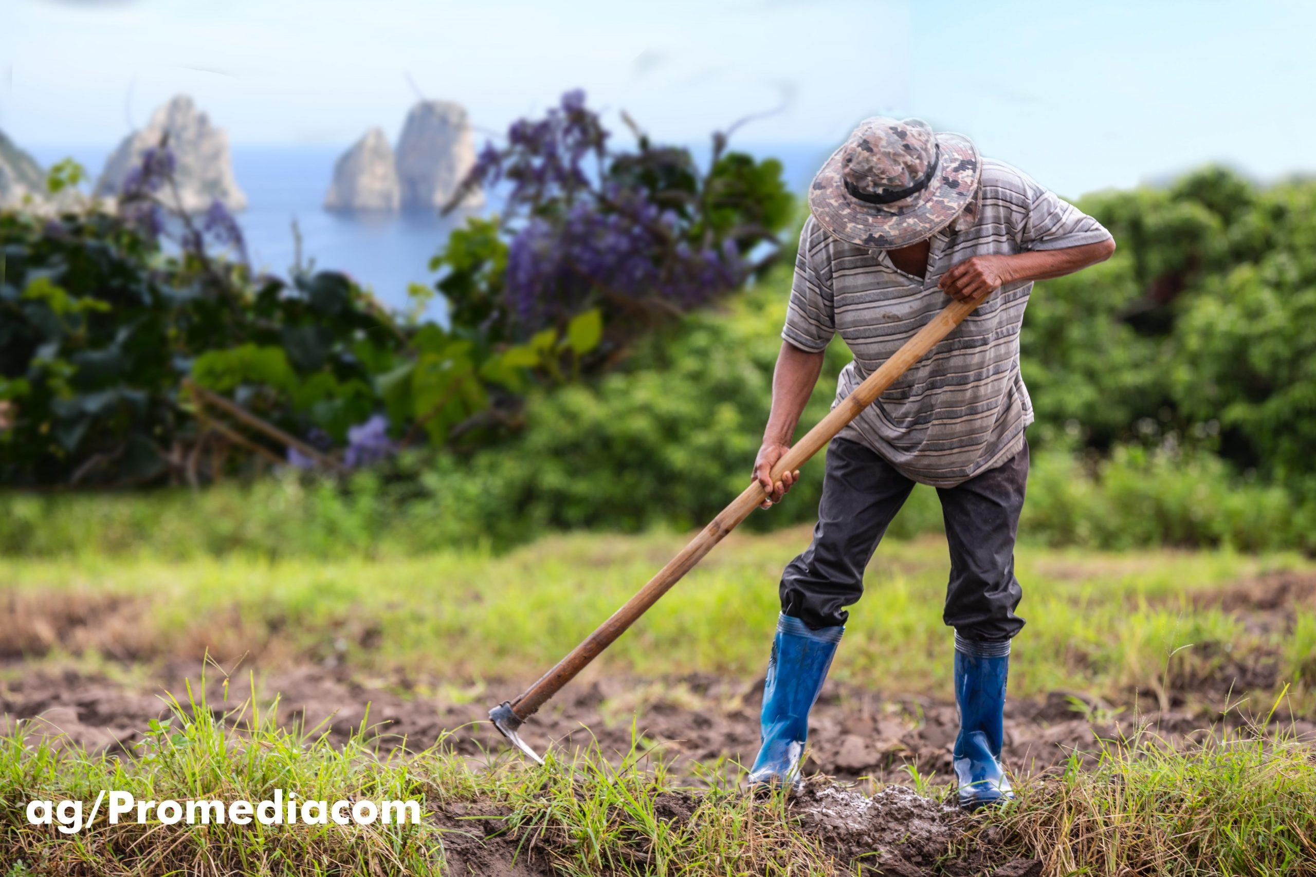 Capri. Boom di Coltivazione di Orti e Giardini ma anche in Terrazzo (FOTO)