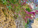 Capri. Muro in pietra come un quadro, La Natura che dipinge l'isola (Video)
